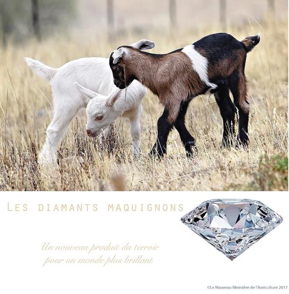suzanne husky_diamants-maquignons