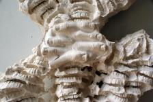 Flower Spine - 2008 du dossier dda Aquitaine de Erwan Venn