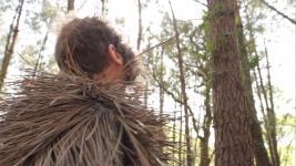 Homo-Pinus Acus - 2019 du dossier dda Aquitaine de Jean Bonichon