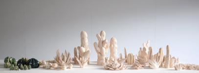 Plantes grasses du dossier dda Aquitaine de Suzanne Husky